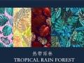 热带雨林的神秘面纱,就让红宝石为你缓缓掀开 (988播放)