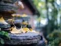 可罗雅优秀案例,十月最美之家在这里 (989播放)