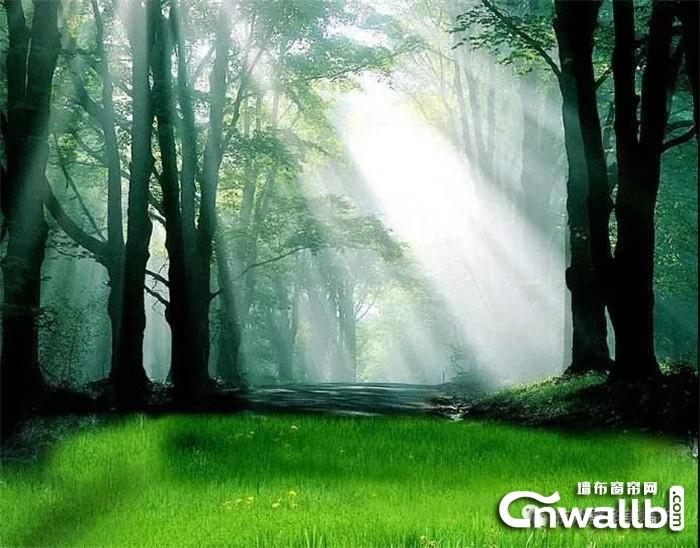 """壁多美负氧离子功能性墙布 给你一片""""森林""""家居"""
