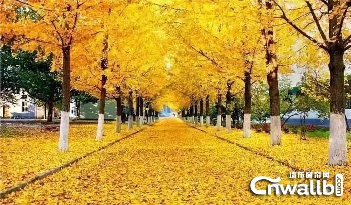 锦尚帛美墙布杏花薇语述说着秋天的最后一段故事!
