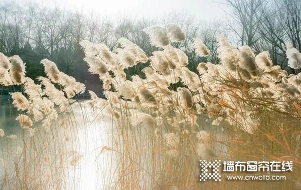 派克新品PW29:有一种美 叫秋天的芦苇