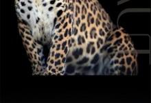 意盛豪庭新品豹纹元素系列,秋冬流行的墙布符号