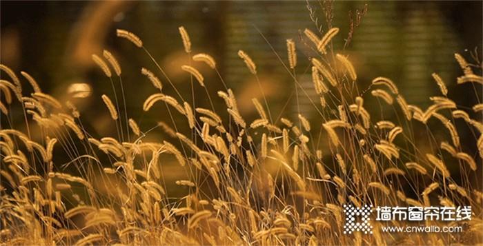 立秋将至,雅诗澜墙布窗帘让家充满阳光与温暖~