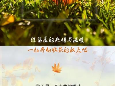 朵薇拉无缝墙布:探寻多彩的秋日,点亮整个居室空间!